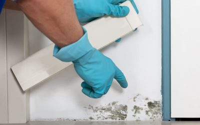 Tips for Dealing with Mold in the Home
